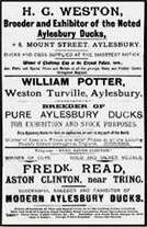 Advertisement for duck breeders