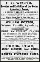 Advertisement for duck breeders